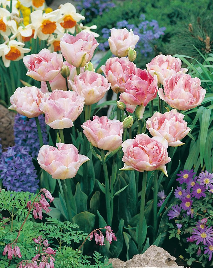 wer von euch hat auch tulpen im garten? #obi #blumen im frühlig,