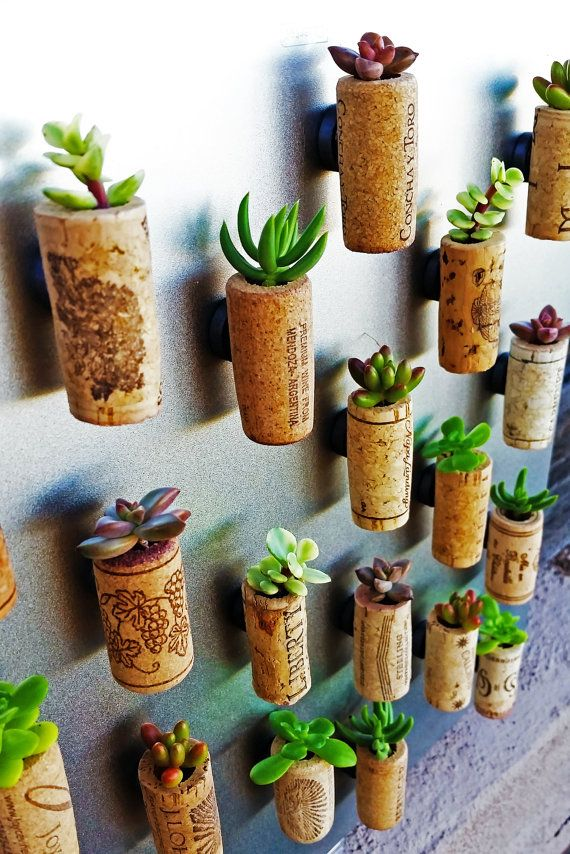 These elegant wine corks have been upcycled into teeny tiny succulent planters! Sure to charm all of your guests, these wine cork planters are mounted onto magnets so they can be hung on the fridge, a mirror, or any other magnetic surface. (If you would prefer to have corks be self-standing, select the No Magnets option.)  Succulents are notoriously hardy and require very little water or care. These tiny succulent planters will only need a few drops of water from a medicine dropper or a…