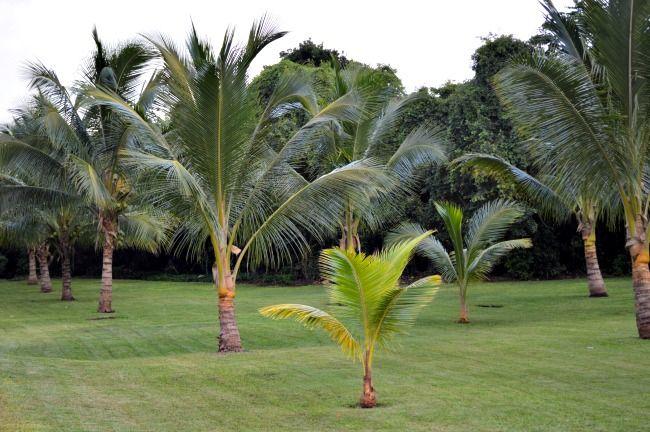 Zentropia spa grounds @Palladium Hotel Group Riviera Maya