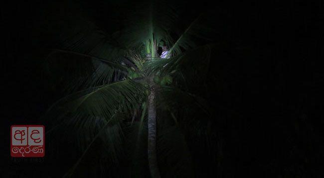В знак протеста мужчина на Шри-Ланке забрался на верхушку пальмы