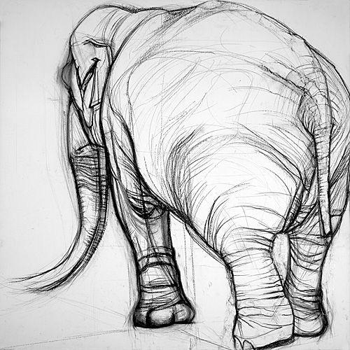Elephas Maximus I. Louise Pallister.