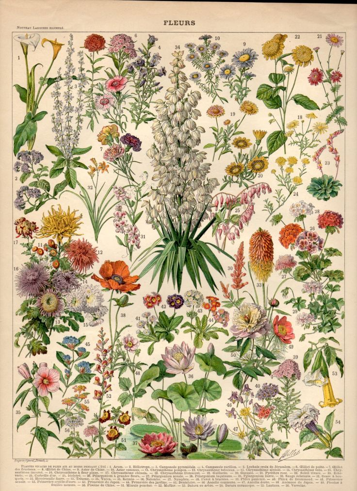 The product Garden Flowers, 1897 Antique Print, Flower Lithograph, Botanical Print, Botany Poster, Waterlily, Arum, Aster, Lantana, Yucca, Poppy, Dahlia, Flora   Tictail lets you create a beautiful online store for free - tictail.com