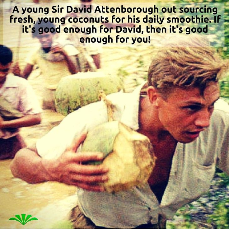 To celebrate David Attenborough's 90th birthday the BBC are broadcasting a 90-minute documentary based on the recent discovery in the BBC archives of colour film from David's 1st TV shows Zoo quest. BBC4 May 11th. It's a dream come true for this naturalist/photographer ;) #davidattenborough #zooquest #coconutwater #adventure #hero #naturalist #smoothie #Attenborough90 #wildlifephotography #rawfood #animalchampion #greateducator #broadcastinglegend
