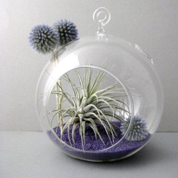 Tillandsia and echinops air plant globe