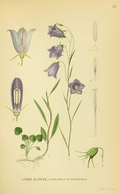 n122_w1150 by BioDivLibrary, via Flickr