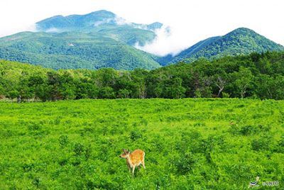 WISMA TRAVEL: มรดกโลกประเทศญี่ปุ่น...อีกหนึ่งมนต์เสน่ห์แห่งญี่ปุ่น | views | shiretoko | hokkaido | www.wismatravel.com | japan | travel | unesgo