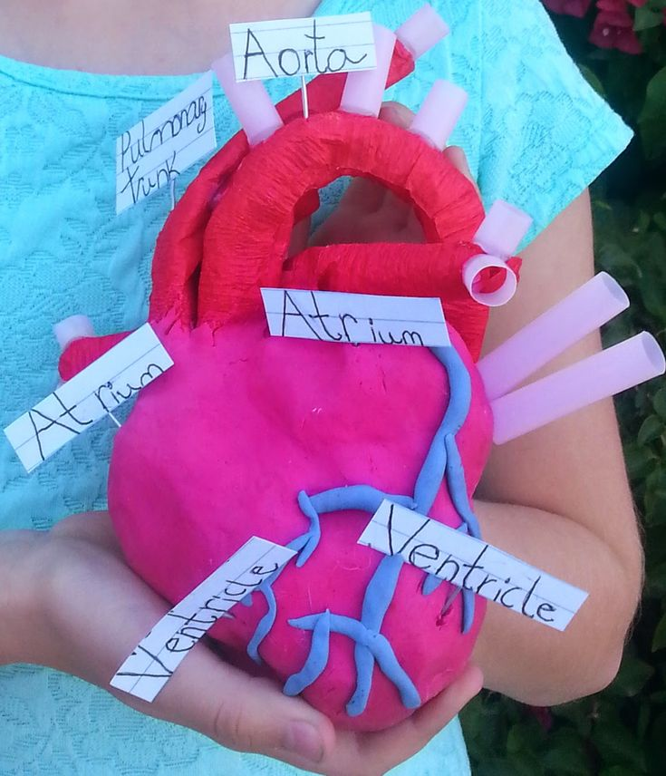 Aluminum foil, crepe paper, pipe cleaners, and clay to make an anatomical model of the heart.
