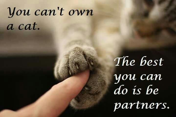 Paws to Fingers