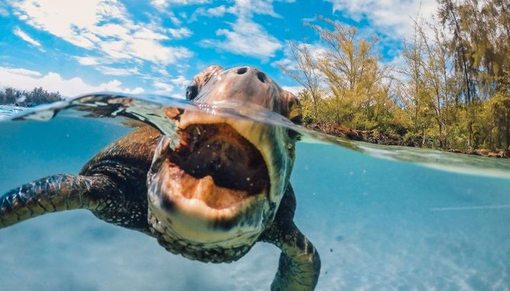 GoPro Channel   A Honu Day
