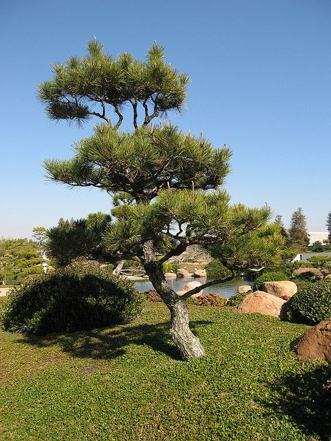Japanese Garden Ideas Zen Bonsai Trees