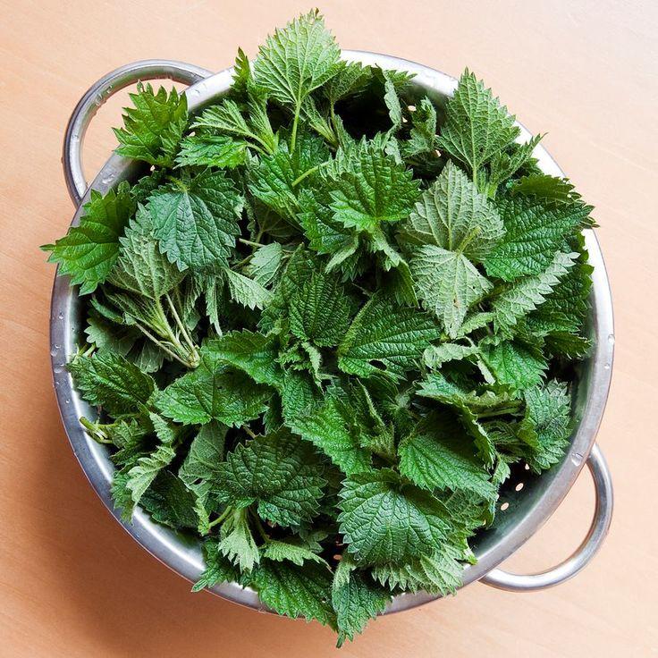 Les 13 plantes comestibles faciles à reconnaitre
