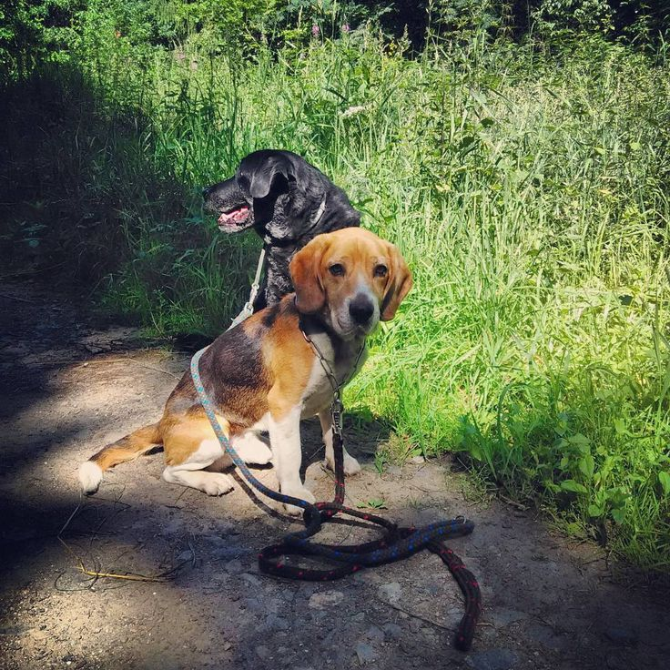 On a walk with the dogs in the woods. A moment of rest #petersaccessories #walk #dogs #woods #forest #nature #rest #moment #hike #sunday #summer