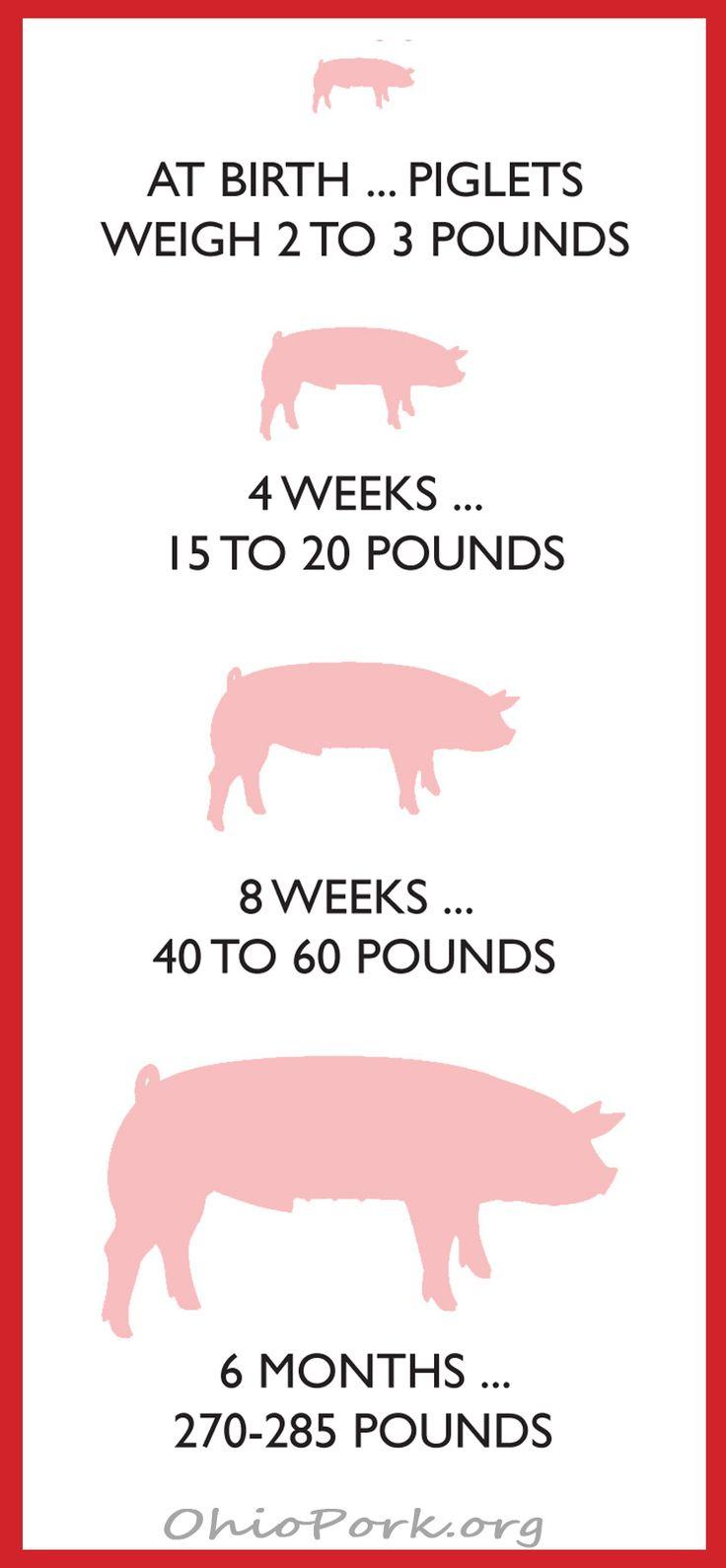 best 25 pig farming ideas on pinterest farms living small farm