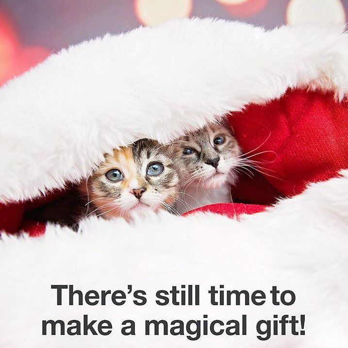 Tis the season to see your gift matched! Now through December 31 every gift to @bestfriendsanimalsociety (bestfriends.org) will automatically be matched  up to $2 million! So your generosity today will go twice as far reaching more homeless pets and helping to save more lives. Its a great time to give and together well make spirits bright for so many this holiday season. All donations are tax deductible!  #cats #dogs #animals #sanctuary #hope #enviro4change #donate #holiday