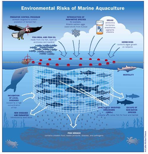 what are the impacts of aquaculture on biodiversity Human impacts on biodiversity of aquatic ecosystem key words:  human impacts on aquatic biodiversity  shrimp culture or the other aquaculture practices].