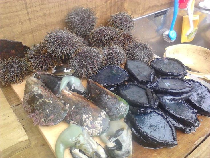 Paua (Abalone, Kina (Sea Urchins), Mussels, the Paua Bag follow Nana's recipe for Creamed Paua