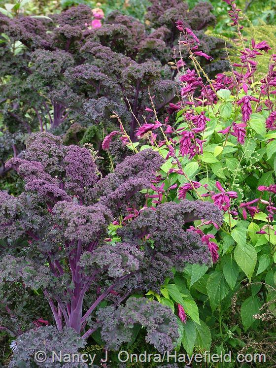 Best Vegetable  Edible Gardens  Inspiration  Design Ideas - Vegetable and flower garden ideas