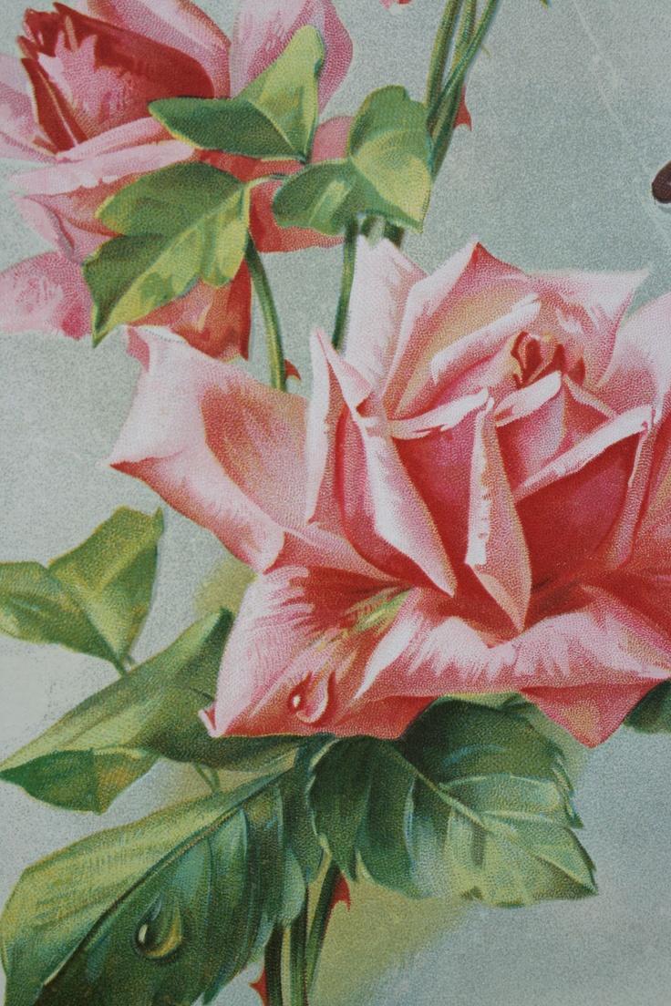 Vintage Home: Catherine Klein Pink Roses Chromo | Vintage ...