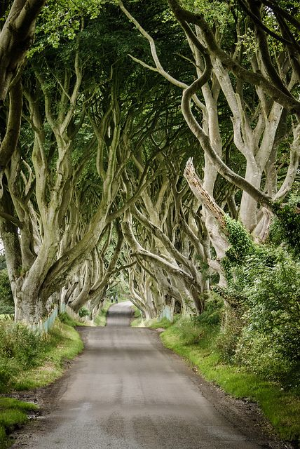 The dark hedges, Northern Ireland...2