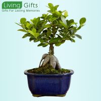 ifts For Your Boss,Gifts For Your Collegue,Send Corporate Gifts Online,Online Store Corporate Gifts,Gifts For Lasting Memories,Gift A Plant Online