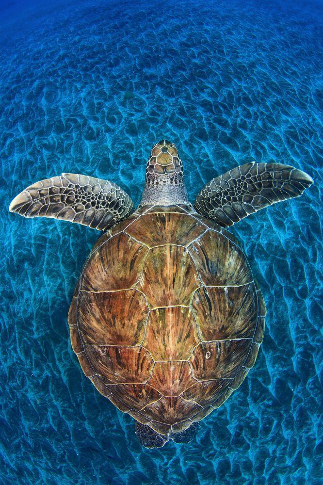 """Naturfotografie-Wettbewerbs des """"BBC Wildlife Magazin"""""""