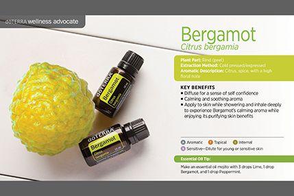 Bergamot single pedro