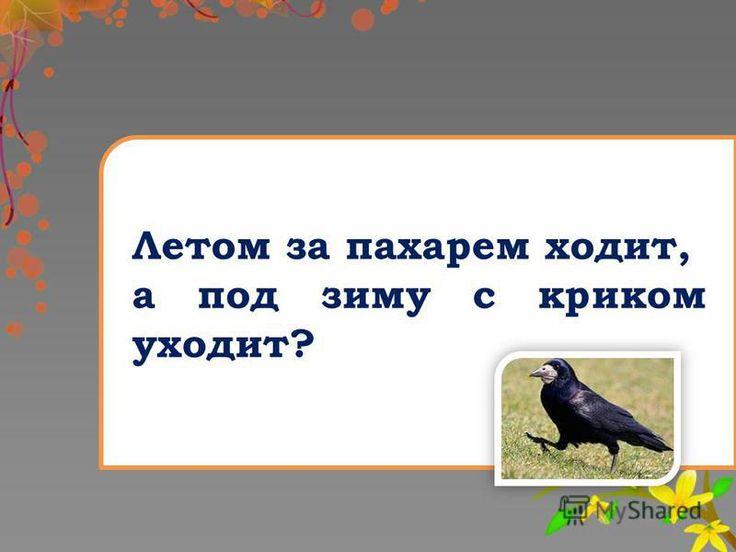 Gitem.ru общество 7 класс