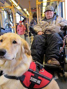 Autism Service Dog Training Near Me