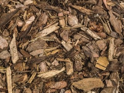 Types Of Bark Mulch: Tips For Using Wood Mulch In Gardens -  As long as there have been trees growing in the forest, there has been mulch on the ground beneath the trees. Cultivated gardens benefit from mulch as much as natural forests, and chipped wood makes an excellent mulch. Find out about using wood mulch in this article.