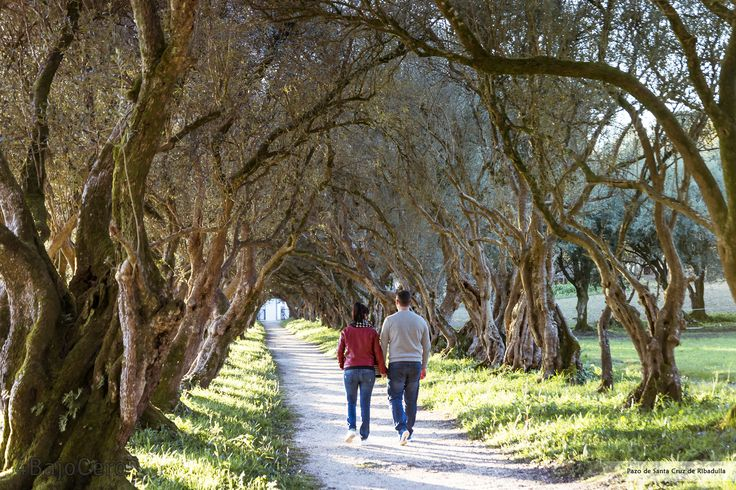 Paseo dos olivos do Pazo de Santa Cruz de Ribadulla #Vedra #Turismo #Audioguias #Fotografia #Galicia #Photography