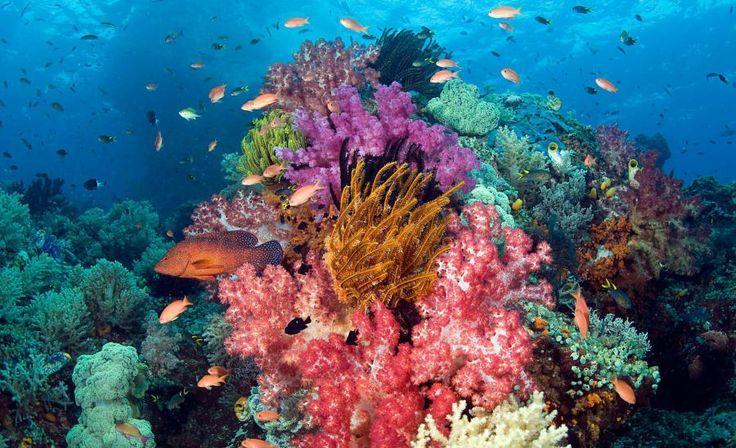 Rajat Ambat est l'une des plus belles îles d'Indonésie