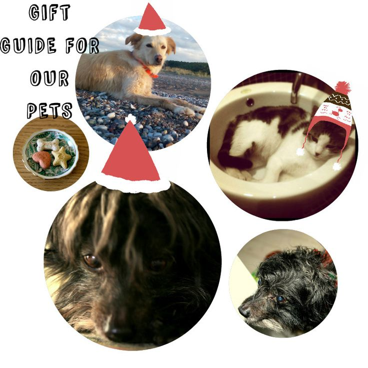 Xmas gift guide for our pets by www.stylencritics.com