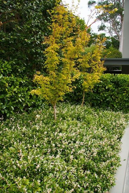15 best images about garden groundcover on pinterest for Ground force garden designs