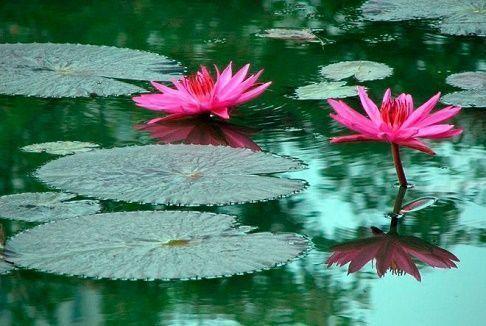 Plantas acuáticas |Relacionamos aquí los nombres de las plantas que viven…