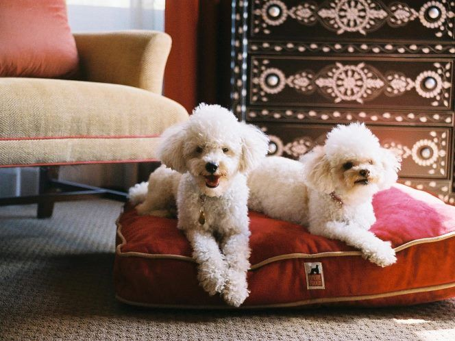 Are You Looking For A Pet Friendly Hotel In London Http Bit