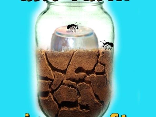 Make an Ant FarmAnts Crafts, Ants Colonial, Ants Farms, Colonial Buildings, Ants Preschool, Diy Ants, Buildings Maze, Ants Activities, Farms Jars