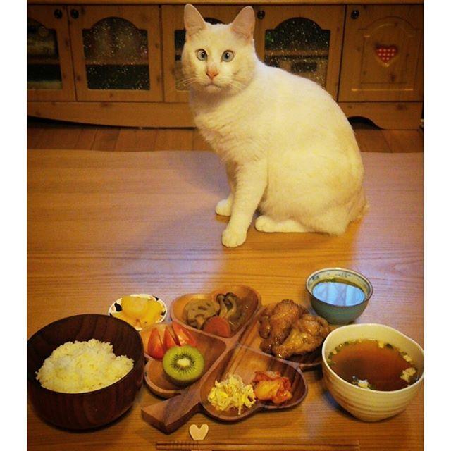 今日の#ランチ♡  #照り焼き#手羽元 #蓮根の煮物 #ツナマヨあえ#豆もやし #キムチ #薩摩芋のレモン煮 #トマト #キウイ #ごはん #味噌汁 #煎茶  #常備菜 #おうちごはん  #猫 #ねこ #愛猫 #白猫 #ニャンコ #にゃんこ #ねこ部 #lovecat #catlove #catstagram #kitty #whitecat #kawaii #ねこすたぐらむ #にゃんすたぐらむ