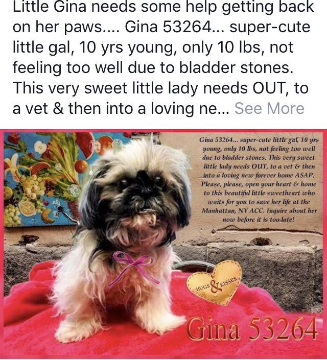 Hina Safe 01 2019 Needs Help Dog Safe Dogs