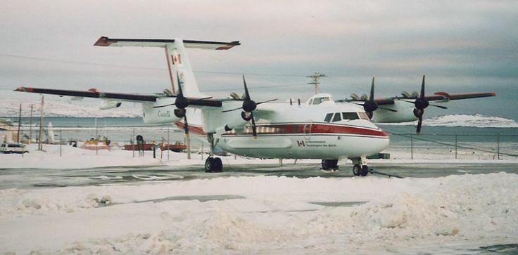 iqaluit nunavut animals