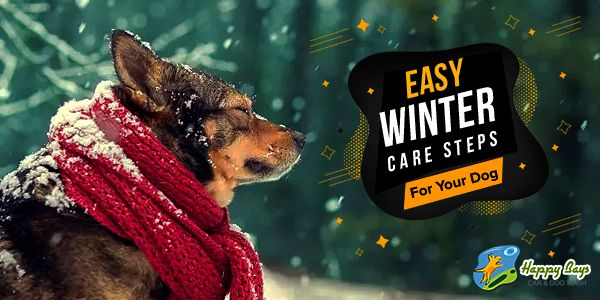 Winter Care For Your Dog In 5 Easy Steps Dogs Dog Wash Dog Care