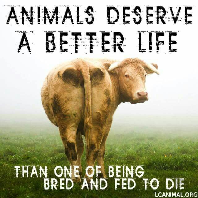 Image result for farm animals matter too