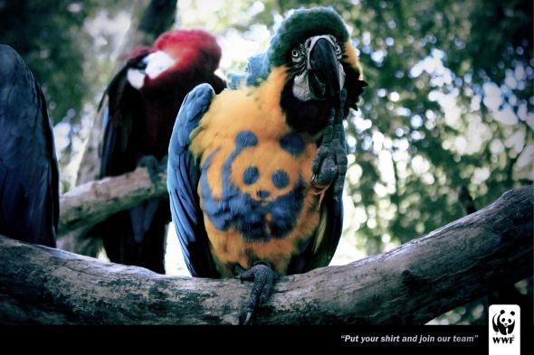 WWF: Arara
