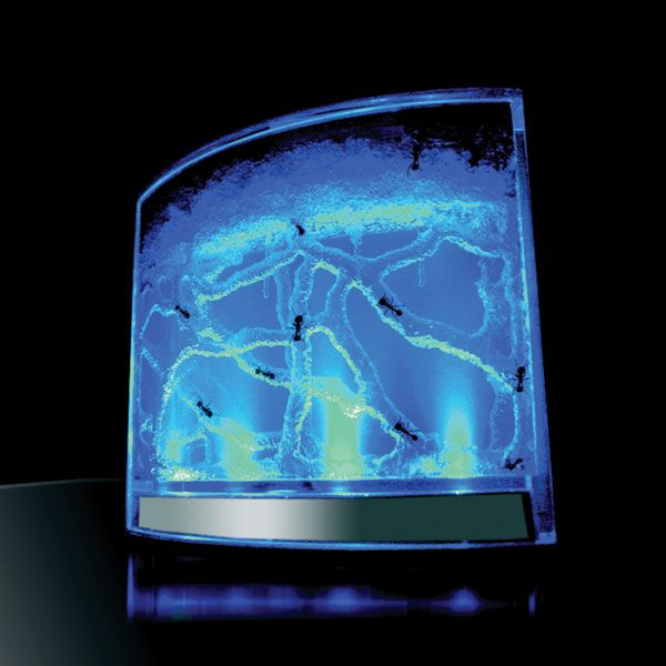 Glow in the Dark Ant Farm - Take My Paycheck - Shut up and take my money! | The coolest gadgets, electronics, geeky stuff, and more!