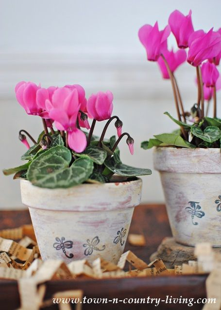 Altered Terra Cotta Pots - white washed and stamped