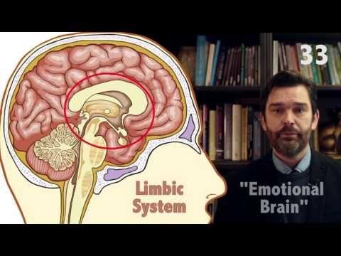 The Triune Brain in 60 seconds - YouTube