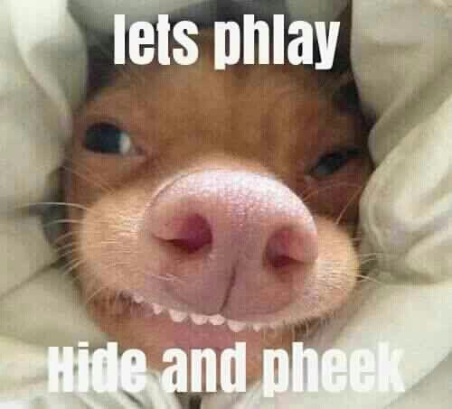 Phteven Dog | #phteven