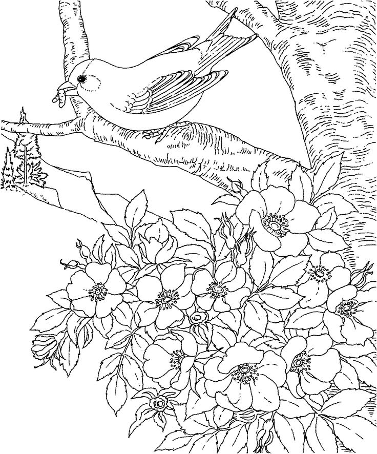 birds and flowers coloring pages | Birds and flowers - Coloring Pages & Pictures - IMAGIXS ...