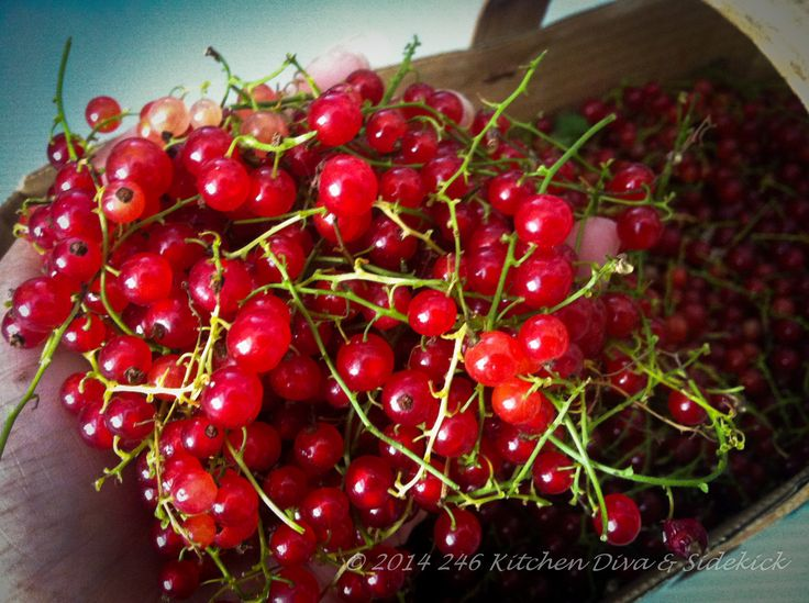 Currant(ly) developing recipes using what else... currants