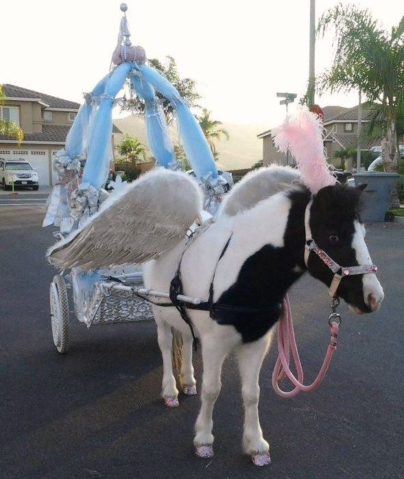 So stinking cute!!! Princess themed pony party with carriage and all!