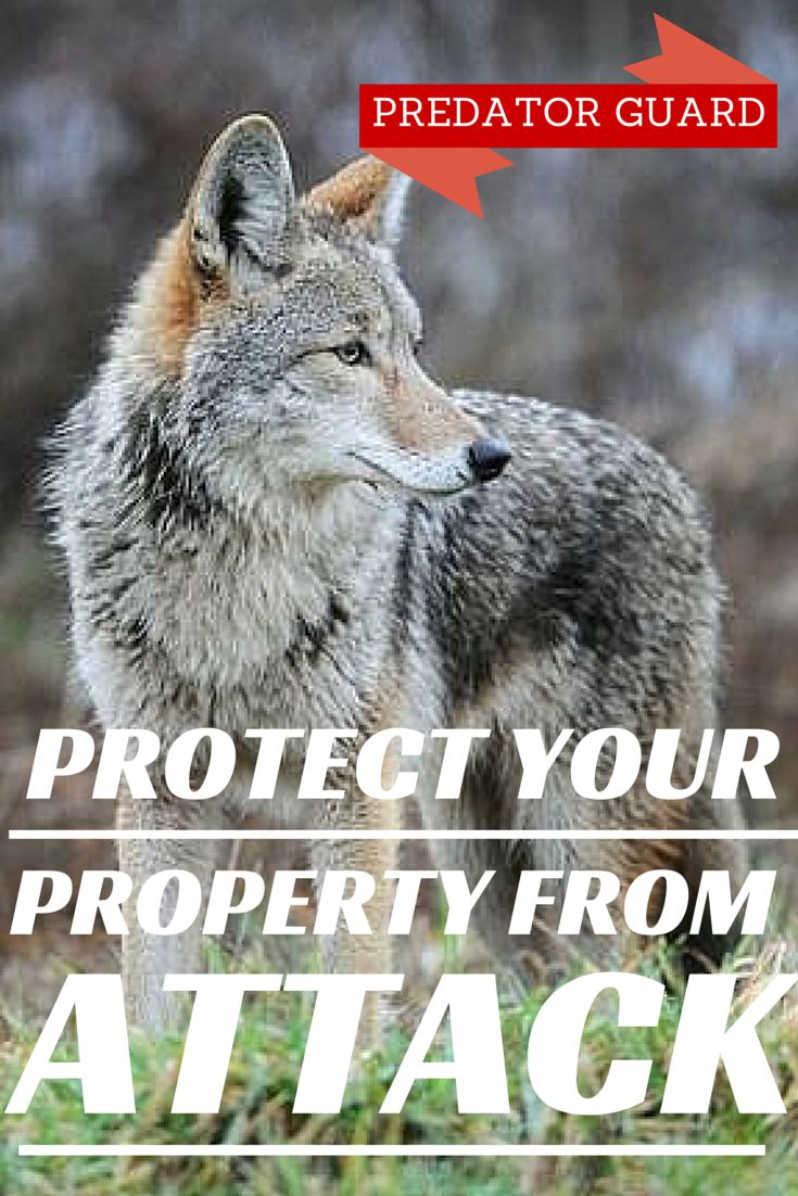 7 Best Coyote Repellents Images On Pinterest